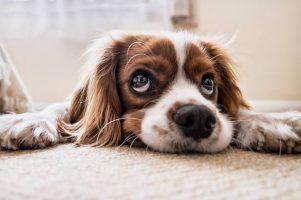 curiosidades-sobre-caes - Em função disso, as pessoas não vão querer mais matar cães - veja! - Em função disso, as pessoas não vão querer mais matar cães - veja!